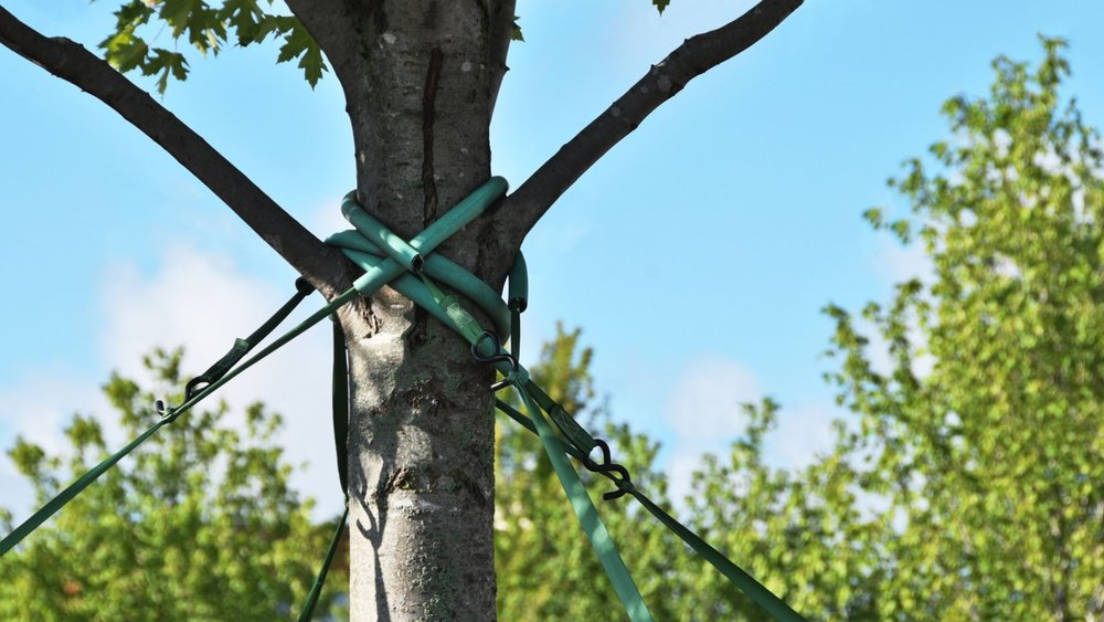 dll-tree-cabling-bracing-header