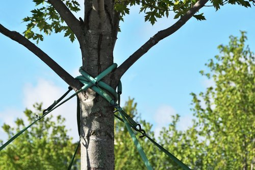 dll-tree-cabling-bracing