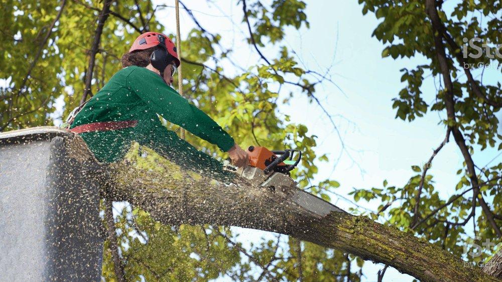 dll-tree-service-removal-header